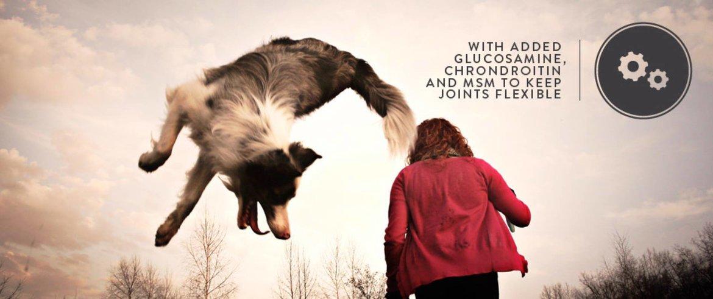 Celtic-Connection-Hond