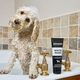 Animology White Wash shampoo _